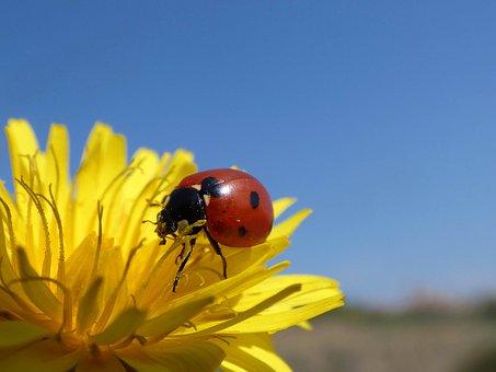 ladybug-2151608__340
